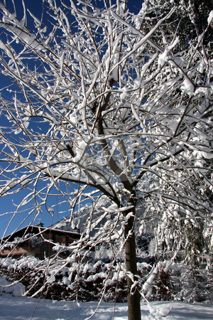 Snow covered trees stock photo, Snow covered trees in winter outdoor nature by Kheng Guan Toh