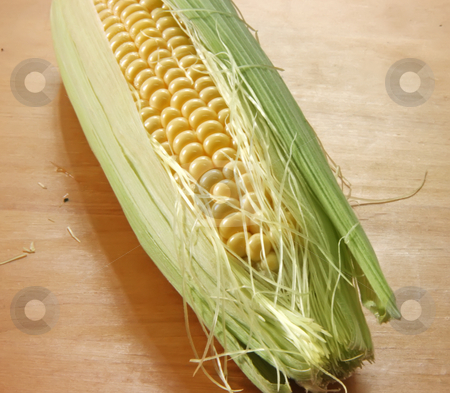 Fresh ear of corn stock photo, Whole fresh raw corn on the cob with husk by Kheng Guan Toh