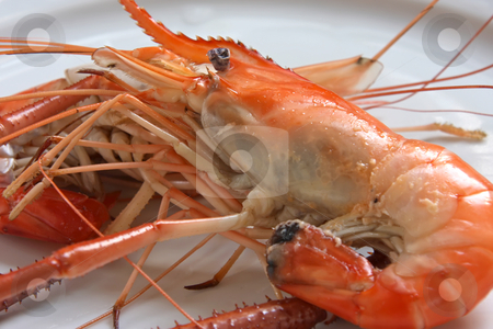Cooked prawn stock photo, Whole fresh raw prawns in shell unpeeled by Kheng Guan Toh