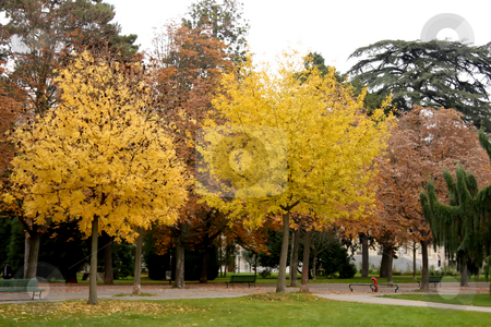 Autumn trees stock photo, Autumn tree with fallen leaves on the grass by Kheng Guan Toh
