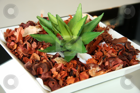 Decorative houseplant stock photo, Decorative houseplant on potpourrie modern elegant design by Kheng Guan Toh