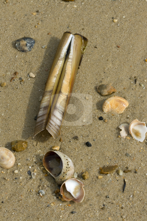 Shells washed up on the beach stock photo, A mixture of shells washed up on the sand, including a razor shell by Chris Pole