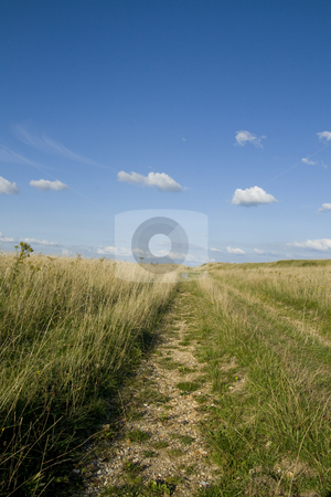 Ancient Drove Road, Dorset, England stock photo, An ancient drove road which was used for moving livestock to market by Chris Pole