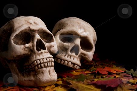 Halloween skulls stock photo,  by Jose Wilson Araujo