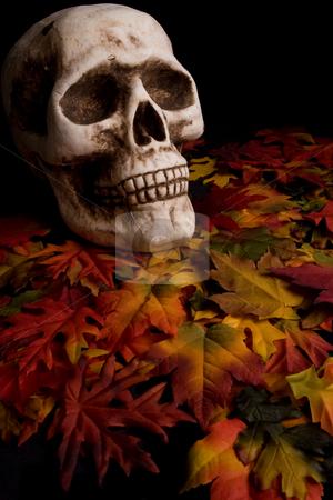 Halloween skull stock photo,  by Jose Wilson Araujo