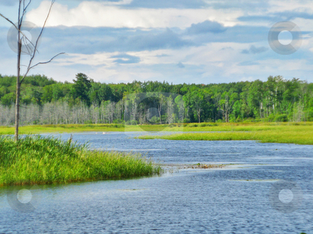 Water_wilderness stock photo, Water flowage through marsh displays wild rice, jack pine, swans and dense forest by Bruce Peterson