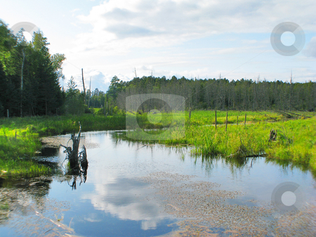Water_wilderness stock photo, Water flowage through marsh displays wild rice, foliage and dense forest by Bruce Peterson