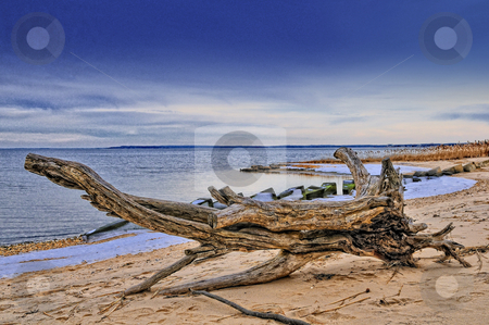 Driftwood stock photo, Large driftwood on winter beach by Tim Doubrava