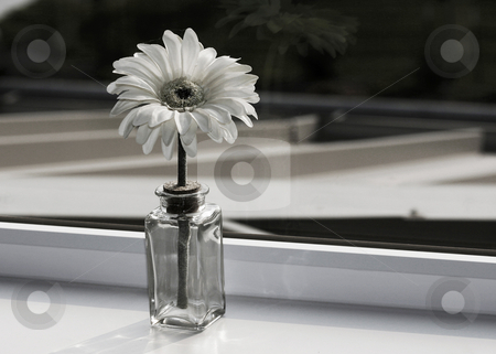 Sweet Daisy stock photo, Single white daisy in a vase in a window sill. by Nikki Rose