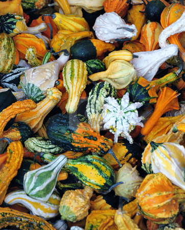 Colorful Wing Gourds stock photo, An Autumn display of many type and colors of wing gourds. by Lynn Bendickson