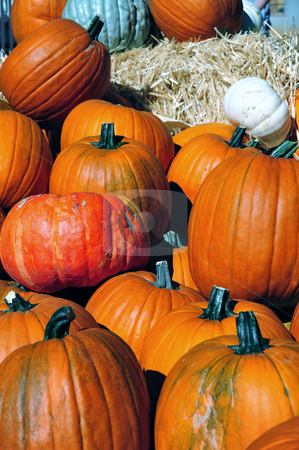 Pumpkins In Autumn stock photo, Assorted sized pumpkins fresh picked from the country farm. by Lynn Bendickson