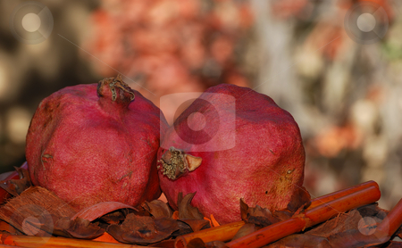 Pomegranates stock photo, Two dried red pomegranates surrounded with fall colors by Denis Radovanovic