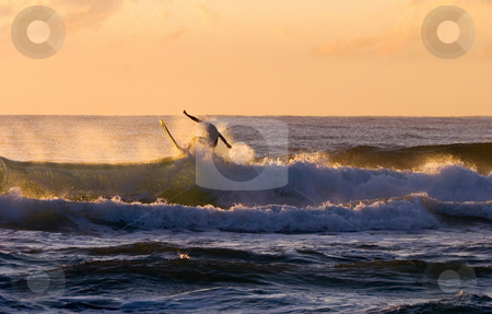 Riding the Crest stock photo, A lone surfer rides the crest of a crashing wave off the Sunshine coast of Australia by Mike Dawson