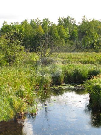 Water_marsh_wilderness stock photo, Secluded stream meanders through the marshes in northern Minnesota wilderness by Bruce Peterson