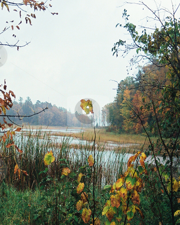 Misty marsh wilderness_autumn colors stock photo, The turning of the foliage shows through the misty marsh environment in the Chippewa National Forest in northern Minnesota. by Bruce Peterson