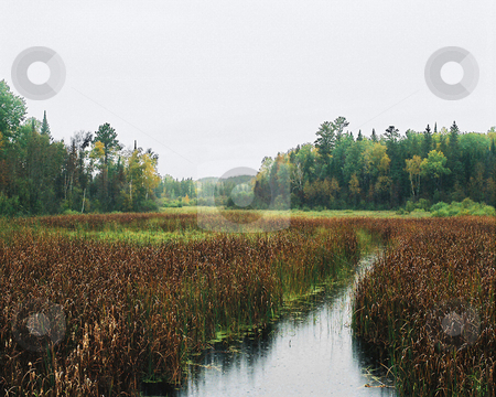 Deep wilderness on dark autumn day stock photo, Gray mist blankets the marsh and dense Minnesota north woods on a dark autumn day. by Bruce Peterson