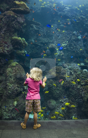 Girl at Aquarium Glass stock photo, A young girl enthralled with the wonder of the underwater world. by A Cotton Photo