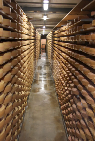 Cheese storage stock photo, Round stacks of cheese stored on shelves in factory warehouse by Kheng Guan Toh