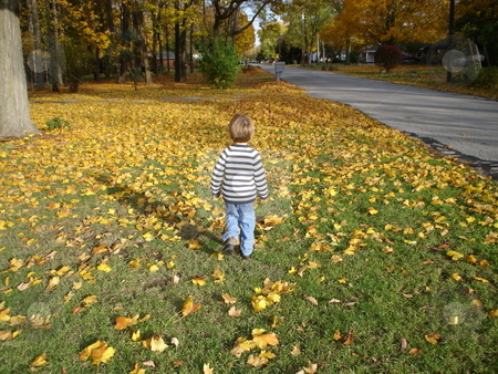 Child walking in fallen yellow leaves stock photo, Child/Toddler walking in fallen yellow leaves. by Heather Shelley