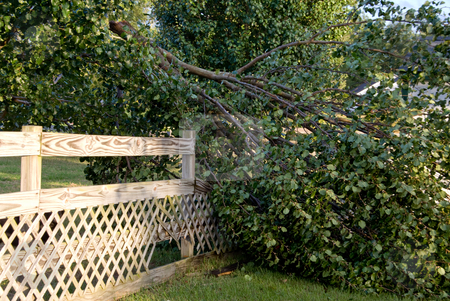 Fallen Tree stock photo, A fallen tree on a fence after a windy storm. by Robert Byron