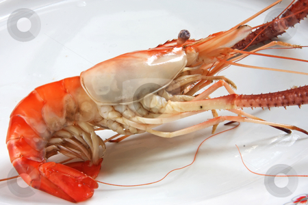 Cooked prawn stock photo, Whole cooked prawn in shell by Kheng Guan Toh