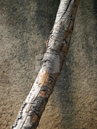 Dead tree stock photo, Old timber in Metaphor about dying nature. by Sinisa Botas