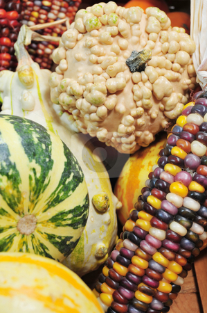 Gourds And Indian Corn stock photo, Autumn harvest of gourds and Indian corn by Lynn Bendickson