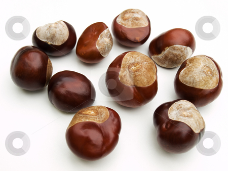 Wild chestnut stock photo, Just a wild chestnut on a clear background. by Sinisa Botas