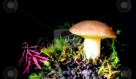 Mushroom stock photo, Mushroom on black background by Sinephot