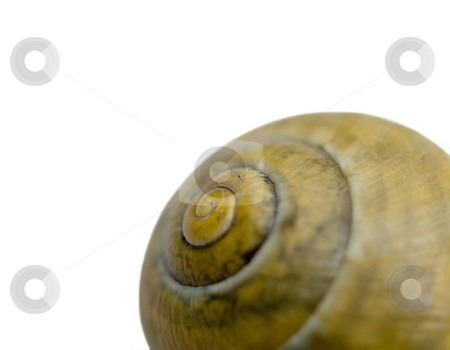 Snail shell stock photo, Macro of a snail shell with selective focusing isolated on white by Laurent Dambies
