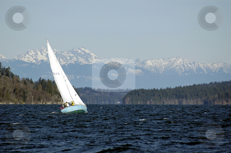 Sailing on Puget sound stock photo, With the Olympic Mountains in the background, a sailboat heads across the Puget Sound during the Toliva Shoal boat race in Olympia, Wa. No release. by Tim Thompson
