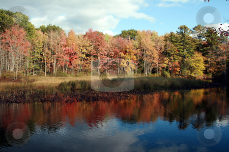 Autumn Reflections, Maine stock photo, Fall foliage reflecting in a pond in rural Maine by Tom and Beth Pulsipher