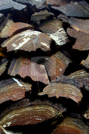 Firewood stock photo, October 9, 2003 : A stack of firewood sits up against a garage in Silverdale, Washington.  Burning wood is a great heat source to heat your home. by Jesse Beals