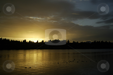 Sunset over flock of ducks stock photo, October 10, 2003 : A golden sunset lit up the skies over Dyes Inlet near Lions Park in Bremerton, Washington.  A flock of ducks could be seen across the water reflecting on the water. by Jesse Beals