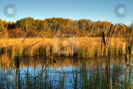 Marsh Land stock photo, A small marsh, with bullrushes on the edge, done in high dynamic range by Richard Nelson