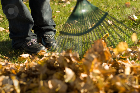 Raking Leaves stock photo, A child helping with fall chores, by raking leaves by Richard Nelson