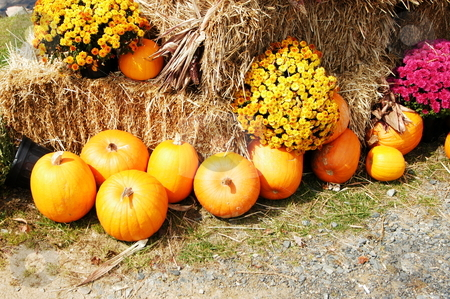 Fall harvest scene stock photo, Fall harvest scene with pumpkins and hay bales by Tim Markley