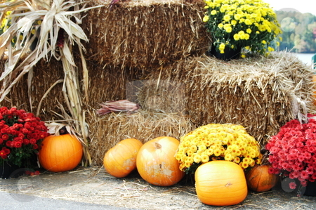 Scence of the season stock photo, Scenes of the fall season in rural North Carolina by Tim Markley