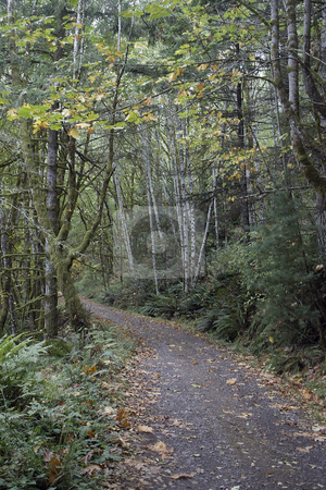 Trail stock photo, October 10, 2003 :   The road down to Guillemot Cove in Seabeck, Washington is draped with fall colors from the falling leaves.. by Jesse Beals