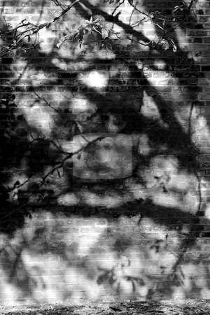 Shadows of Branches on a Brick Wall stock photo, Black and White abstract image of dark shadows on a brick wall in Autumn in London by Jeff Crowe