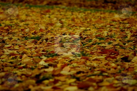 Autumn leaves stock photo, Autumn leaves in a park in Stockholm by Jeff Crowe