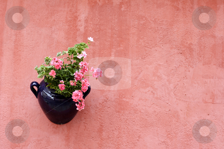 Traditional hanging plant stock photo, A traditional hanging plant pot on terracotta painted wall by Mark Yuill