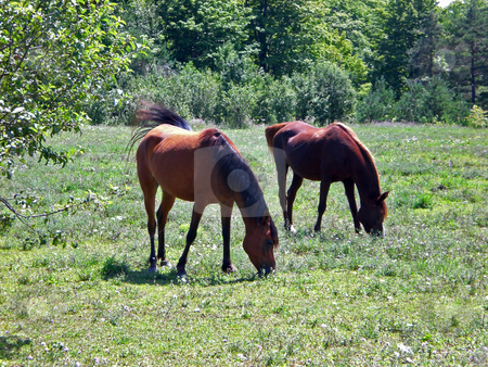 Two horses grazing stock photo,  by J.G. Byers