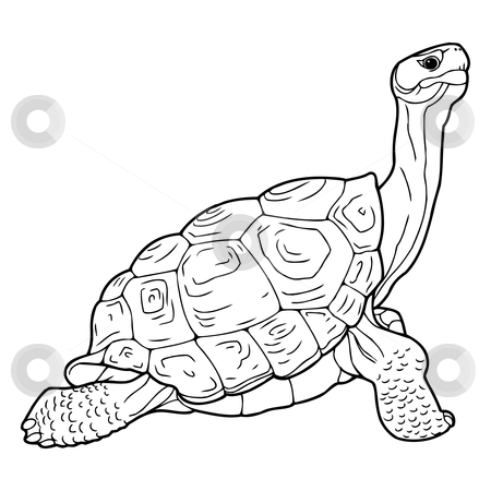 Turtle stock vector clipart, Detailed easy to edit sketch of turtle by Oleksandr Krizhanivskyy