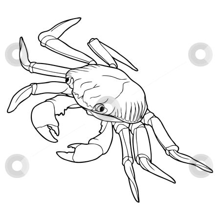 Crab stock vector clipart, Detailed easy to edit sketch of crab by Oleksandr Krizhanivskyy