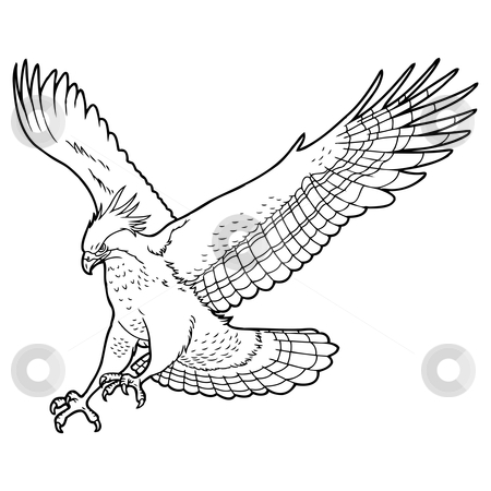 Eagle stock vector clipart, Detailed easy to edit sketch of eagle by Oleksandr Krizhanivskyy