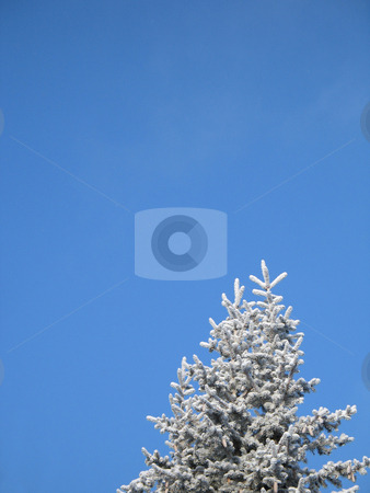 A frosted tree with blue sky background stock photo, A frosted tree with blue sky background by Mbudley Mbudley