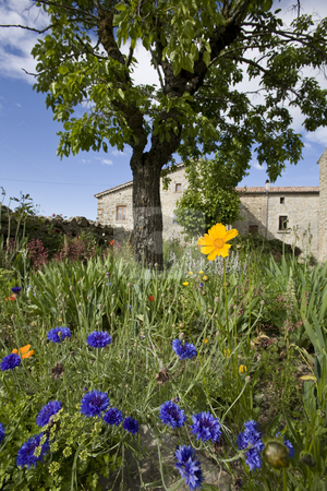 French farm house garden in spring stock photo, Colorful flowers in french farm house garden by Mark Yuill