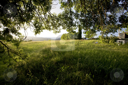 View from under a tree after a rainstorm france stock photo, A view from under a tree after a rainstorm france by Mark Yuill