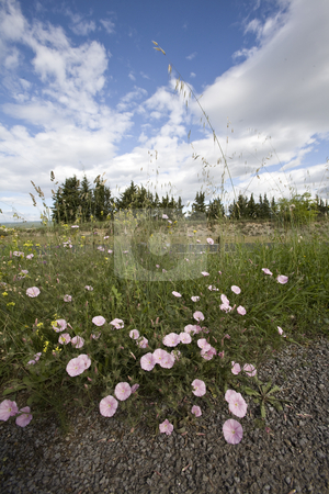 Wild spring flowers by a roadside stock photo, Wild spring flowers by a french roadside by Mark Yuill